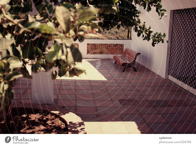 Tree Vacation & Travel Loneliness House (Residential Structure) Calm Relaxation Wall (building) Wall (barrier) Break Bench Gate Spain Seating Terrace Andalucia