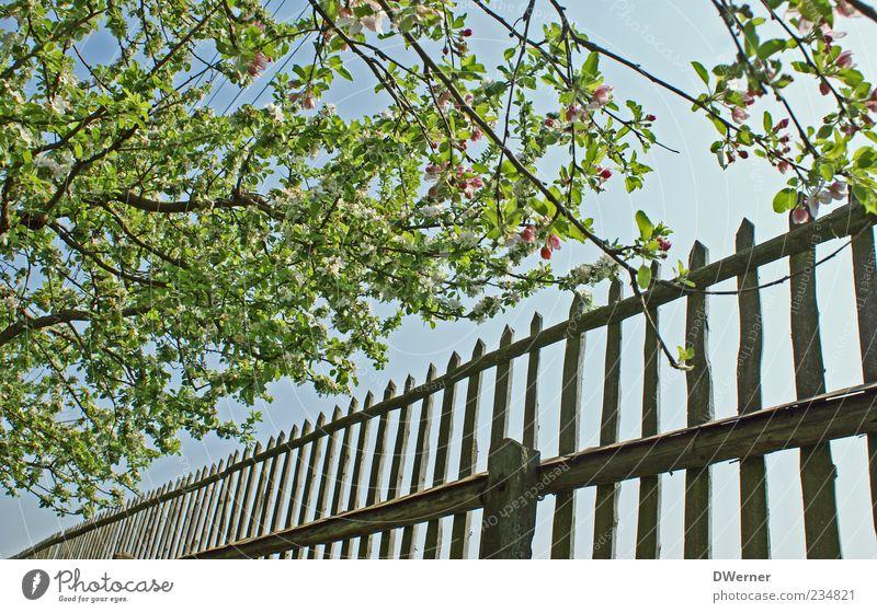Sky Nature Blue Green Tree Leaf Calm Relaxation Environment Landscape Spring Garden Elegant Glittering Esthetic Illuminate