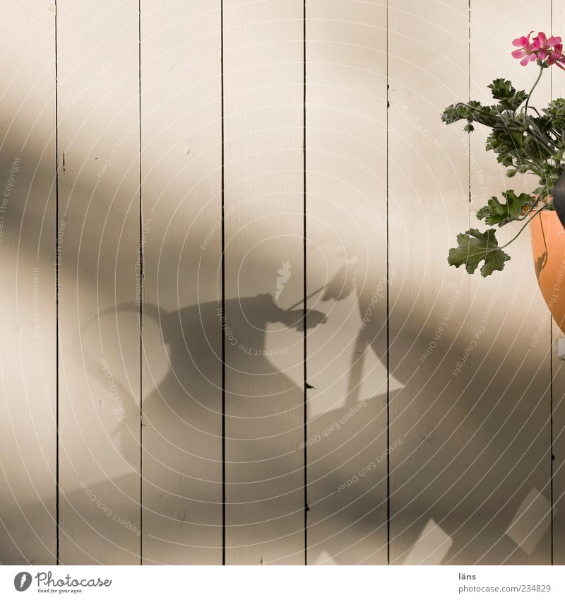 peripheral phenomenon Hut Authentic Flower Flowerpot Geranium Leaf Wooden wall Canceled Gardenhouse Blossoming Colour photo Exterior shot Day Light Shadow