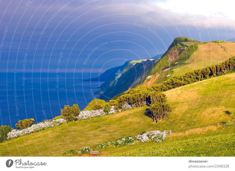 Sao Jorge island, Azores Beautiful Ocean Island Nature Landscape Plant Sky Rock Volcano Coast Natural Blue Green Idyll Atlantic Ocean Cliff coastal Farm