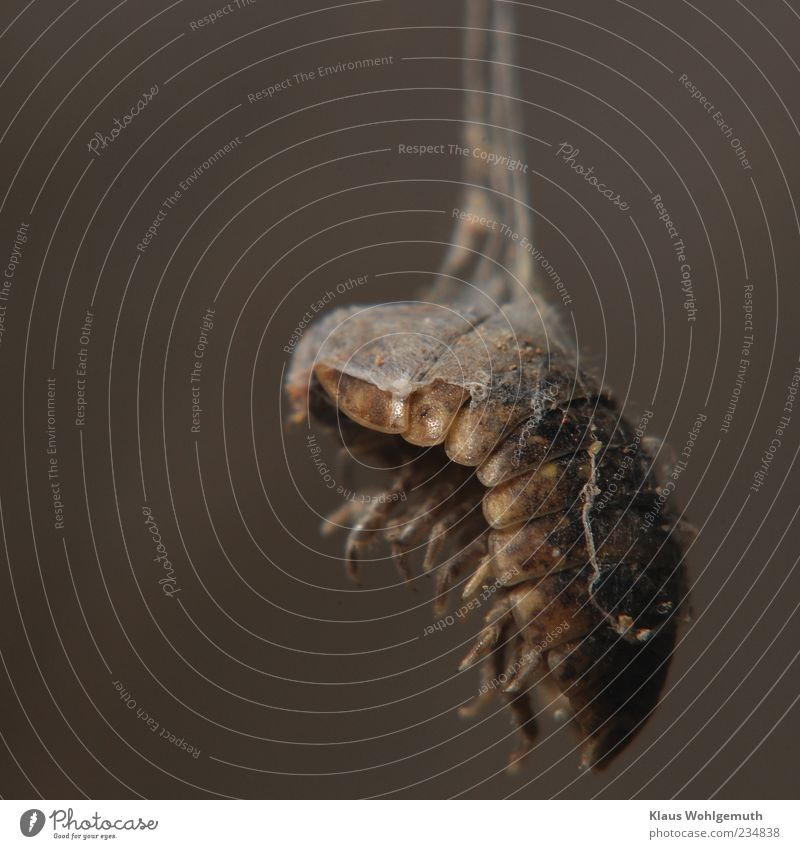 Animal Death Dark Gray Legs Brown Insect Hang Disgust Shriveled Macro (Extreme close-up) Prey Human being Woodlouse Cobwebby Chitin
