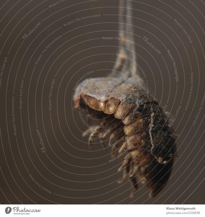Animal Death Dark Gray Legs Brown Insect Hang Disgust Shriveled Macro (Extreme close-up) Prey Human being Woodlouse Cobwebby Chitin