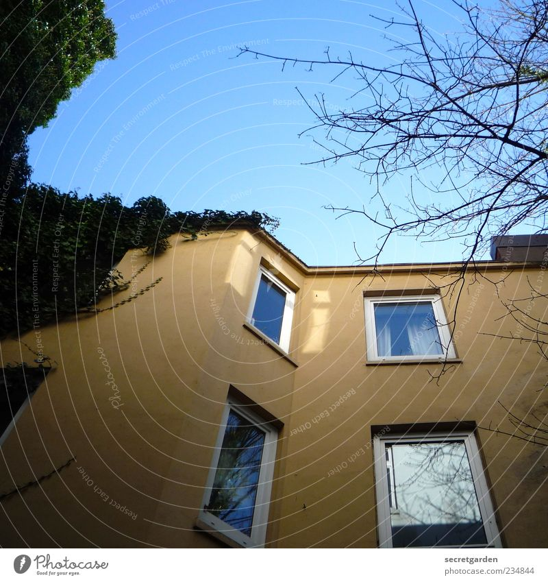 Blue Green House (Residential Structure) Yellow Environment Window Building Facade Perspective Branch Manmade structures Backyard Cloudless sky Ivy Overgrown