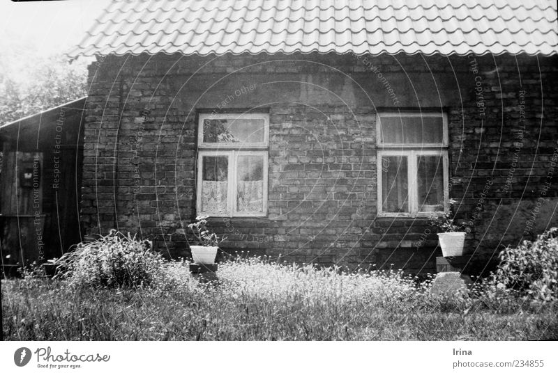 Old House (Residential Structure) Window Wall (building) Grass Garden Wall (barrier) Exceptional Authentic Roof Historic Analog Old town Poland Brick wall Pot plant