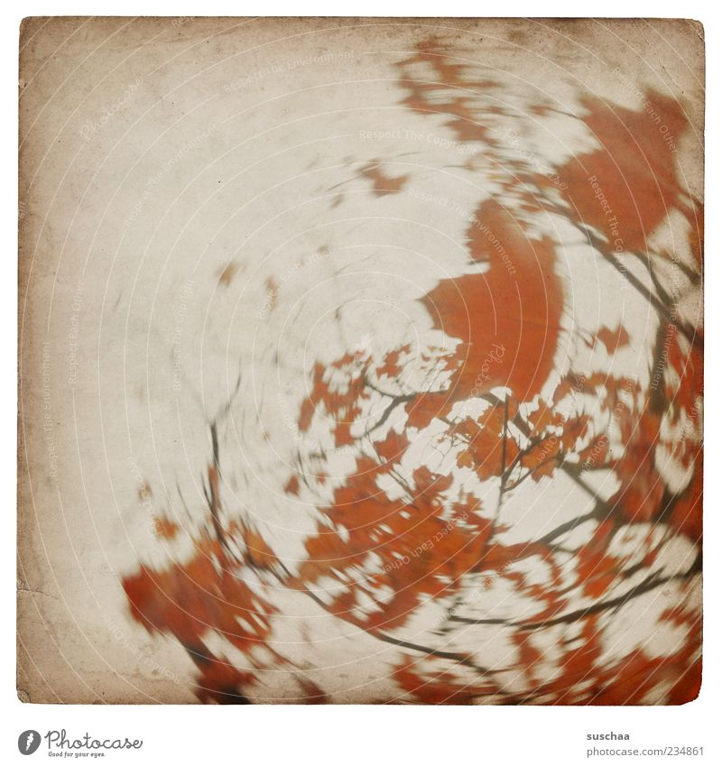 wobble tree picture ... Nature Autumn Tree Round Red Leaf Branch Circle Sky Day Motion blur Blur Deserted Rotate