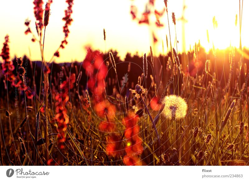 The best of times is now Nature Sunrise Sunset Spring Beautiful weather Flower Bushes Meadow Spring fever Dandelion Colour photo Exterior shot Copy Space top