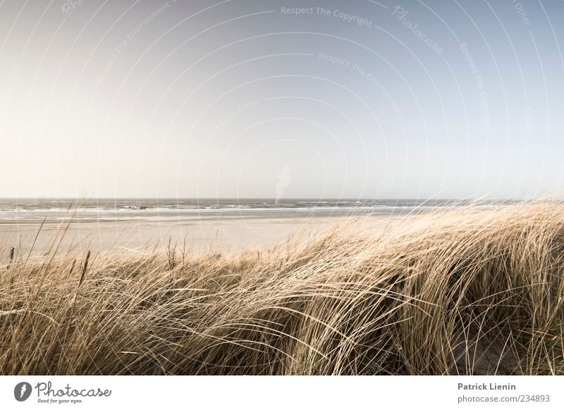 Spiekeroog | Sea Feel Far-off places Beach Ocean Waves Environment Nature Landscape Plant Sand Sky Horizon Sun Sunlight Weather Beautiful weather Wind Grass