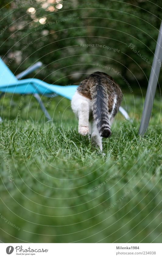 Cat Nature Animal Meadow Garden Going Running Pelt Beautiful weather Hunting Pet Escape Paw Tails Deckchair Creep
