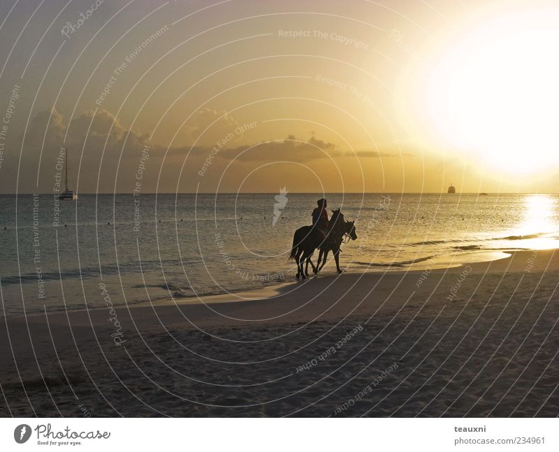 easy rider Ride Equestrian sports Human being 2 Sunrise Sunset Beach Ocean Caribbean Sea Horse Animal Romance Calm Adventure Esthetic Relaxation Colour photo