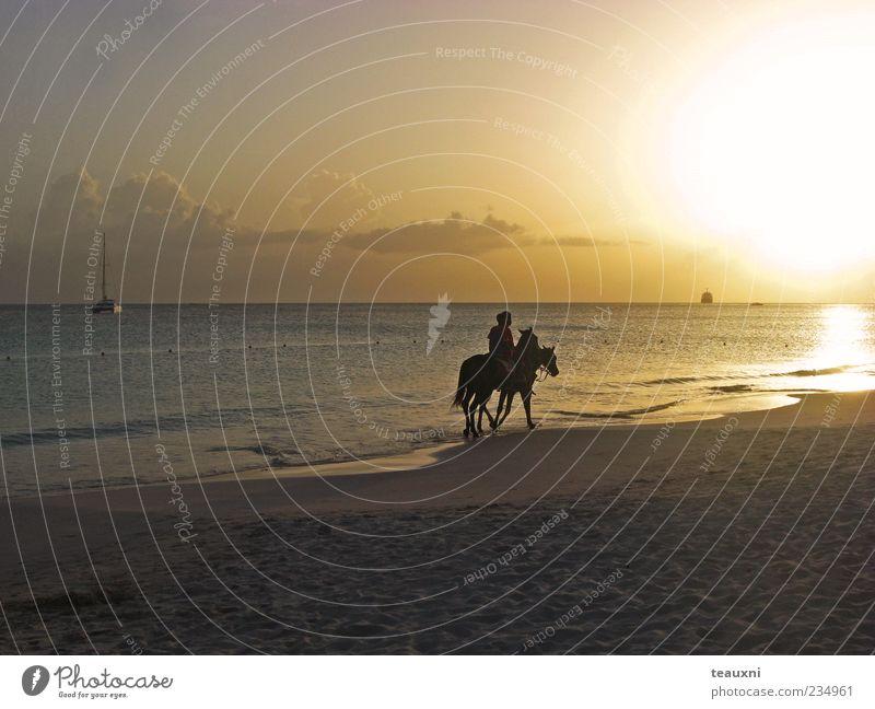 Human being Ocean Beach Animal Calm Relaxation Adventure Esthetic Horse Romance Caribbean Sea Equestrian sports Ride Sandy beach Sports Leisure and hobbies