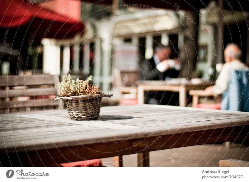 coffee break Lifestyle Harmonious Well-being Contentment Café Human being Masculine Friendship Adults 2 45 - 60 years Decoration Table Chair Flowerpot Wood