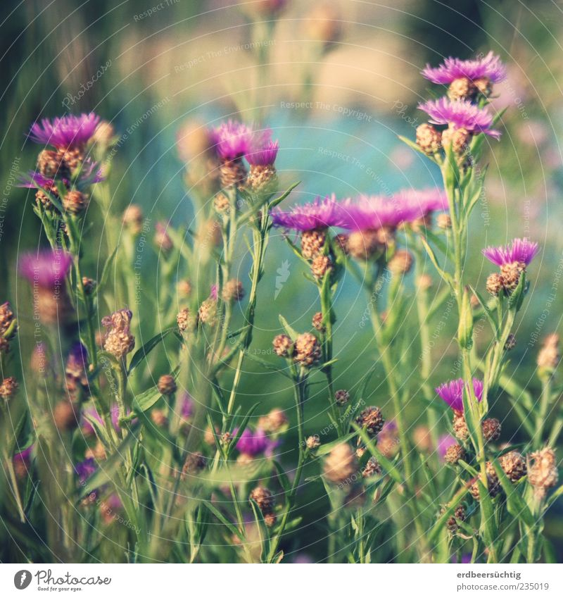 meadow flowers Summer Nature Plant Flower Blossom Meadow River Blossoming Growth Beautiful Green Violet Pink Summery Colour photo Day Shallow depth of field