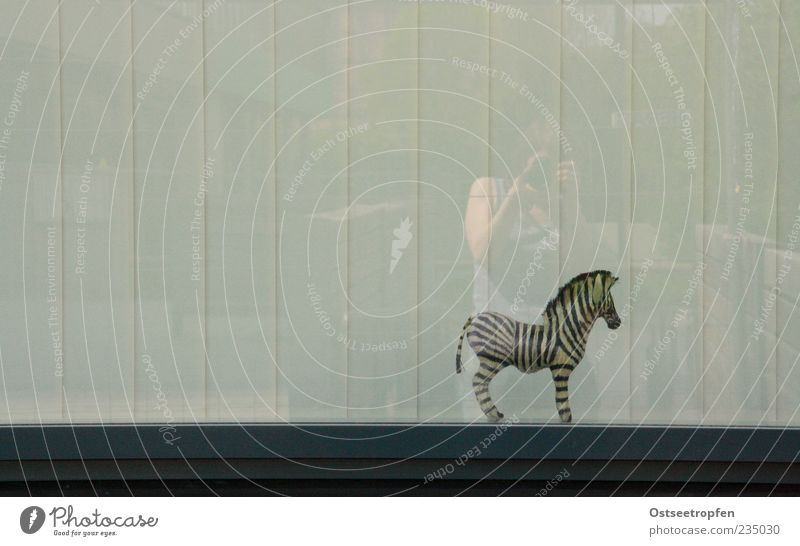 Human being Animal Wild animal Stand Observe Toys Whimsical Window pane Striped Zebra