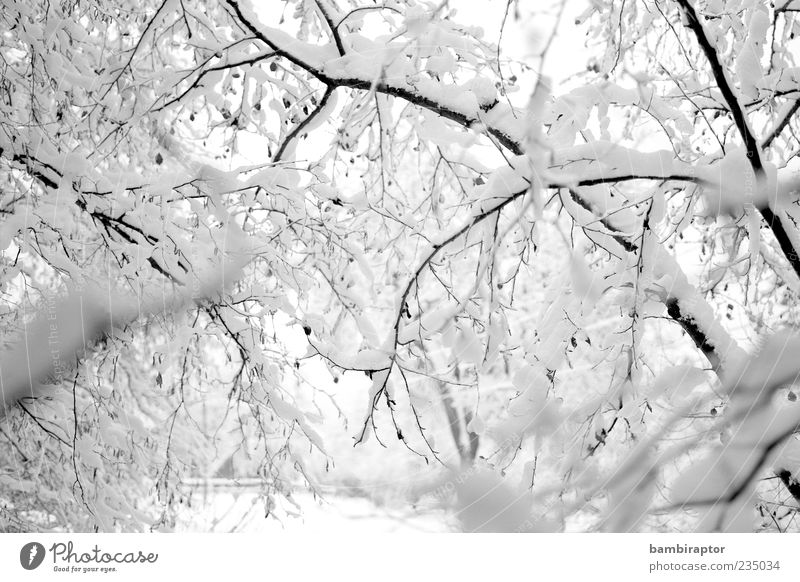 Who by water Winter Snow Environment Nature Weather Ice Frost Tree Forest Freeze Cold Soft White Analog Branch Deserted Black & white photo Exterior shot