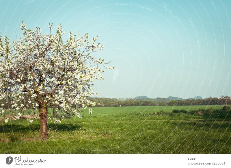 Sky Nature White Green Tree Plant Summer Far-off places Environment Landscape Meadow Grass Spring Blossom Horizon Climate