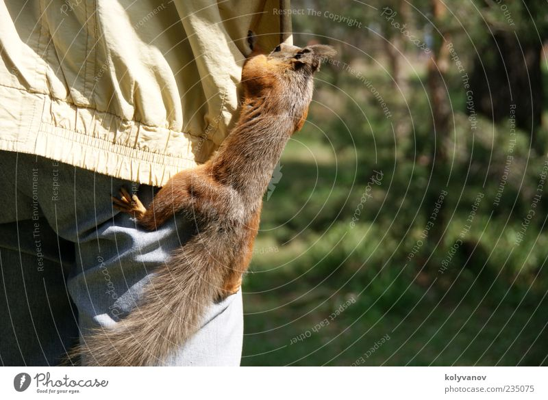Fast clearing Nature Beautiful Animal Movement Brown Funny Small Wild Wild animal Cute To feed Mammal Thief Claw Rodent