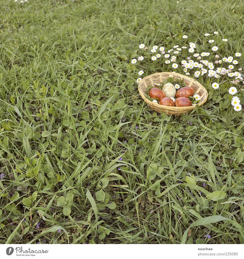 Easter egg picture .. Nature Spring Grass Meadow Tradition Easter basket Flower Daisy Colour photo Exterior shot Deserted Day Easter egg nest Grass meadow