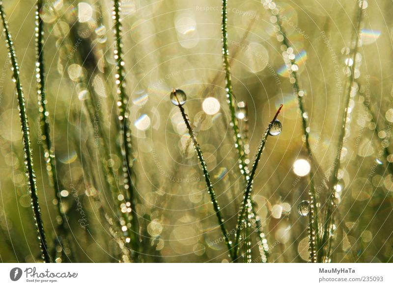 Dew on grass Nature Water Plant Colour Leaf Emotions Grass Spring Garden Art Park Rain Earth Climate Drops of water Elements