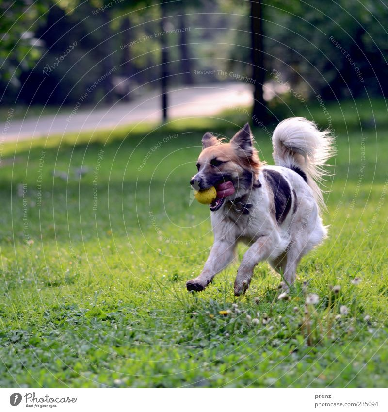 Dog Plant Animal Meadow Playing Grass Spring Jump Park Walking Running Action Ball Pelt Beautiful weather Tails