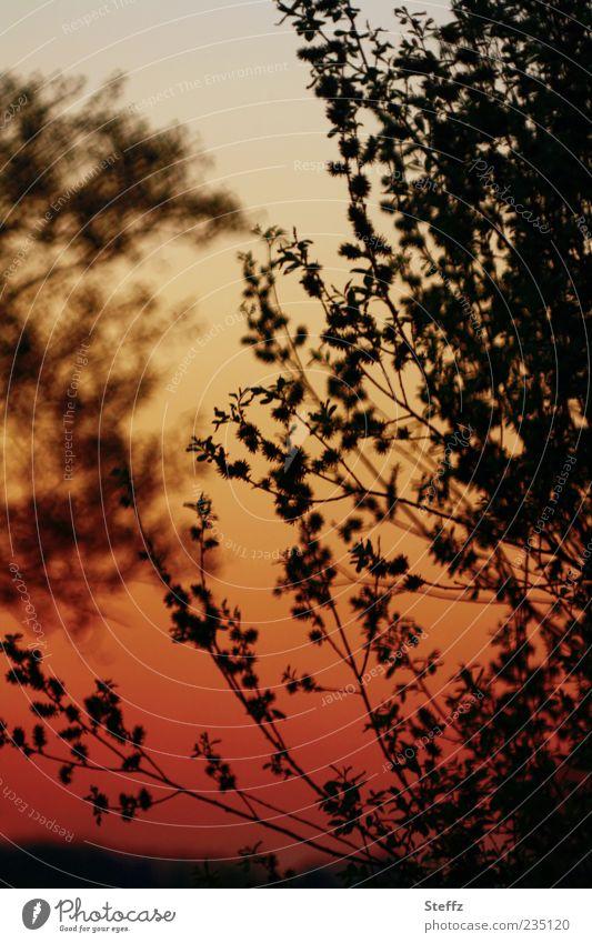 evening mood Nature Plant Cloudless sky Sunrise Sunset Sunlight Summer Beautiful weather Tree Bushes Leaf Red Black Moody Romance Calm Colour Dusk Orange