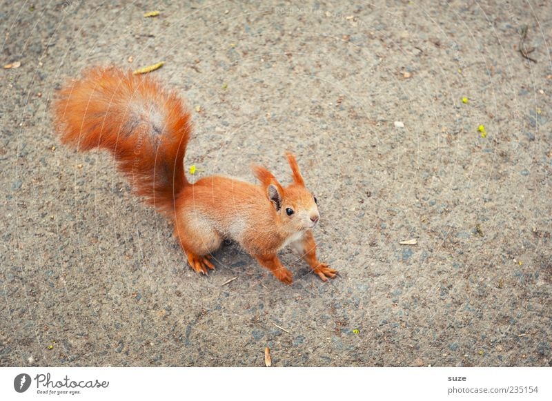 Well, you Animal Pelt Wild animal 1 Small Curiosity Cute Beautiful Gray Red Squirrel Rodent Tails Ground Interest Smooth Upward Bird's-eye view Floor covering