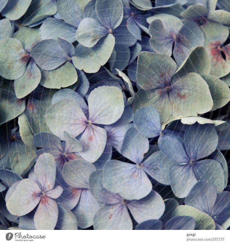 Beautiful Plant Flower Leaf Colour Blossom Background picture Esthetic Kitsch Violet Exotic Copy Space Part of the plant