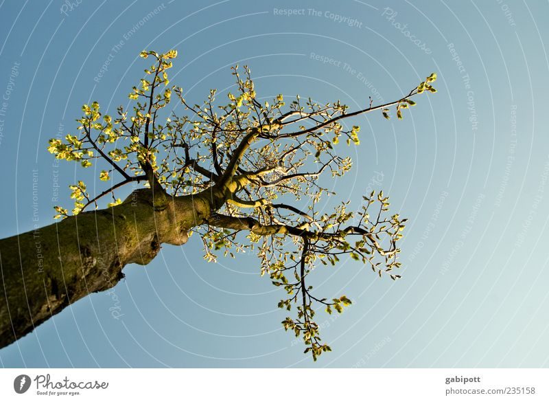 Sky Nature Blue Green Tree Plant Leaf Environment Life Above Spring Happy Blossom Air Large Uniqueness