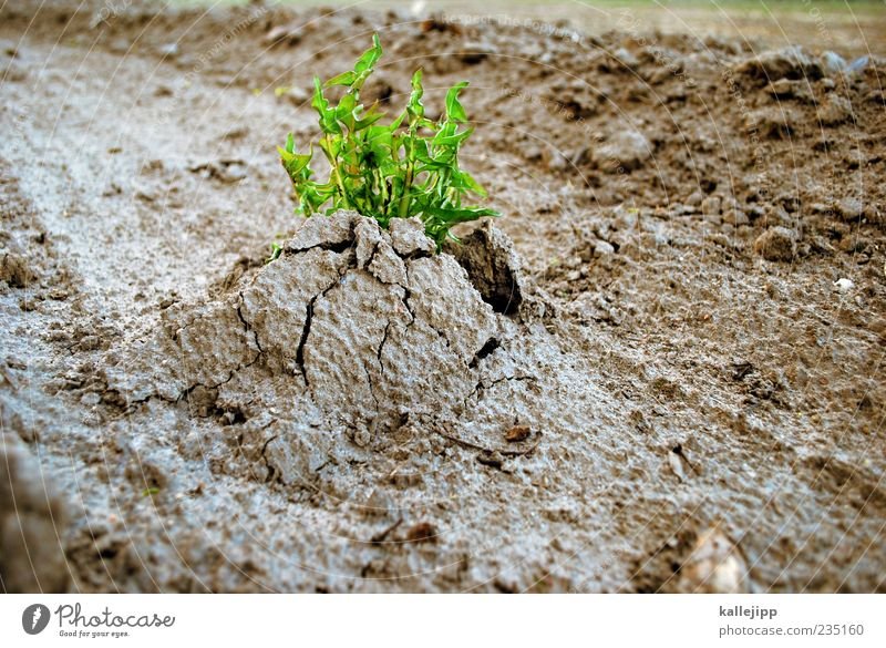 Nature Plant Environment Life Earth Power Field Beginning Force Growth Change Desire Agriculture Strong Crack & Rip & Tear