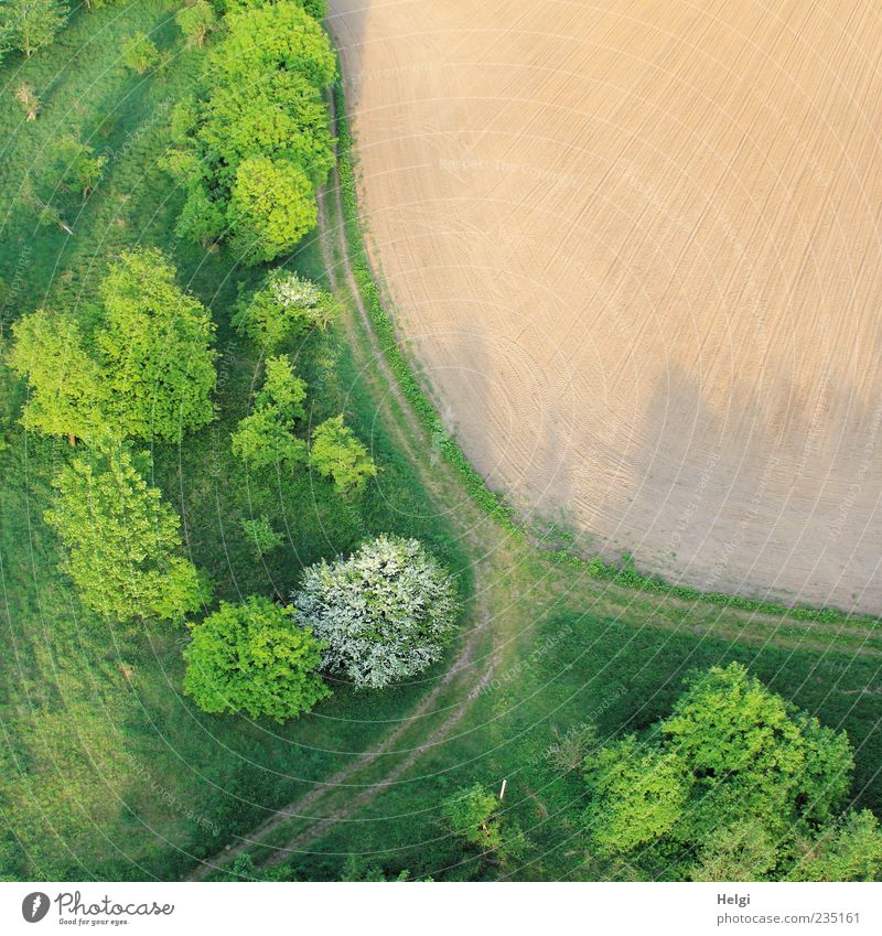 Aerial view with field, trees, grass and path in spring Environment Nature Landscape Plant Earth Spring Beautiful weather Tree Grass Bushes Field Lanes & trails