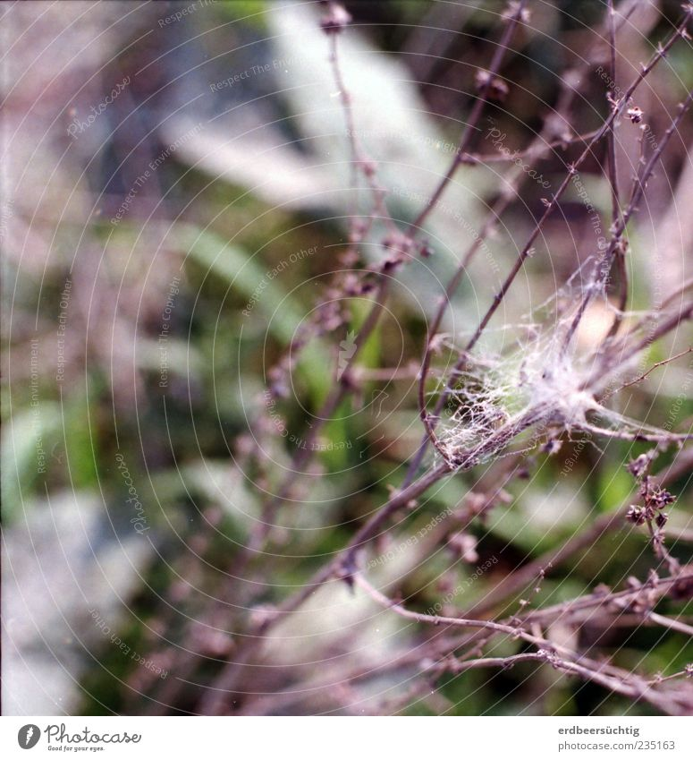 Nature Plant Summer Leaf Animal Meadow Grass Field Growth Change Bushes Delicate Spider's web Caterpillar Twigs and branches Cobwebby