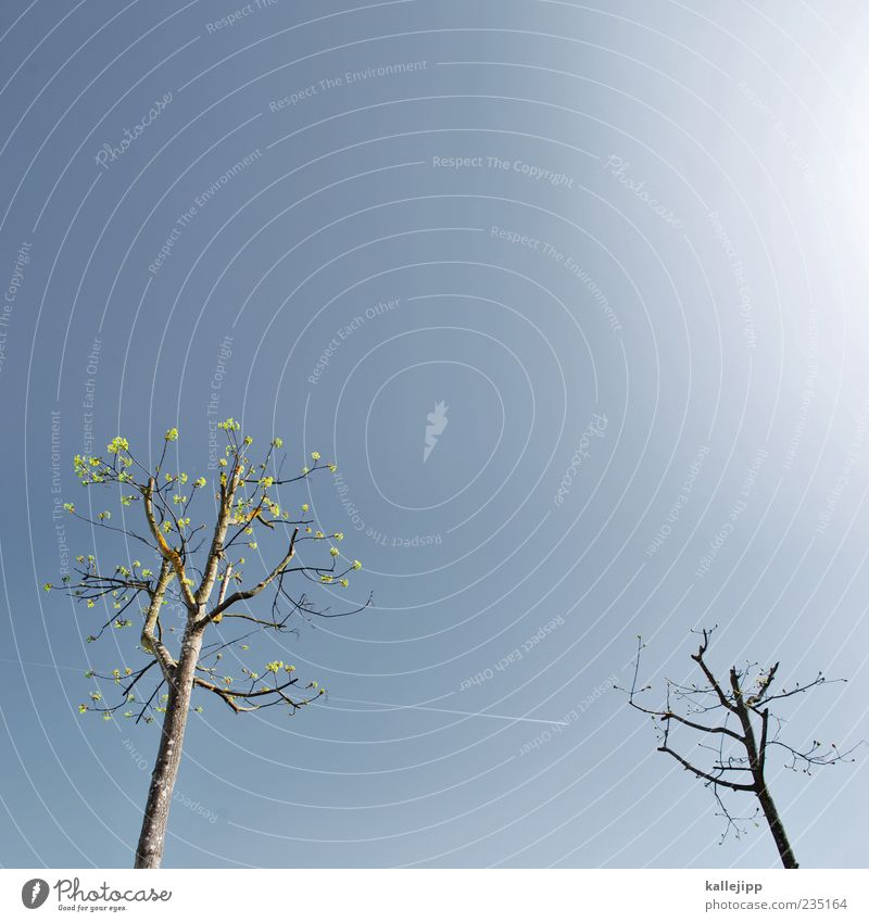 Tree talk Environment Nature Plant Growth Vapor trail Sky Spring Colour photo Multicoloured Exterior shot Deserted Copy Space top Copy Space middle Light Shadow