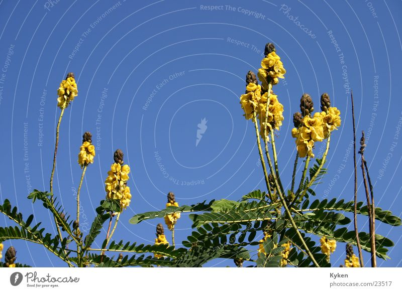 Off to heaven Flower Blossom Green Yellow Growth Summer Spring Sky Blue plant green