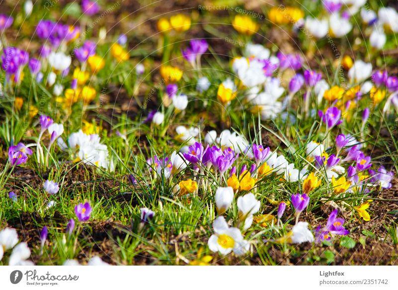 Who stole the crocus nut? Environment Nature Landscape Plant Flower Garden Park Meadow Sign Blue Multicoloured Love Romance Beautiful Calm Hope