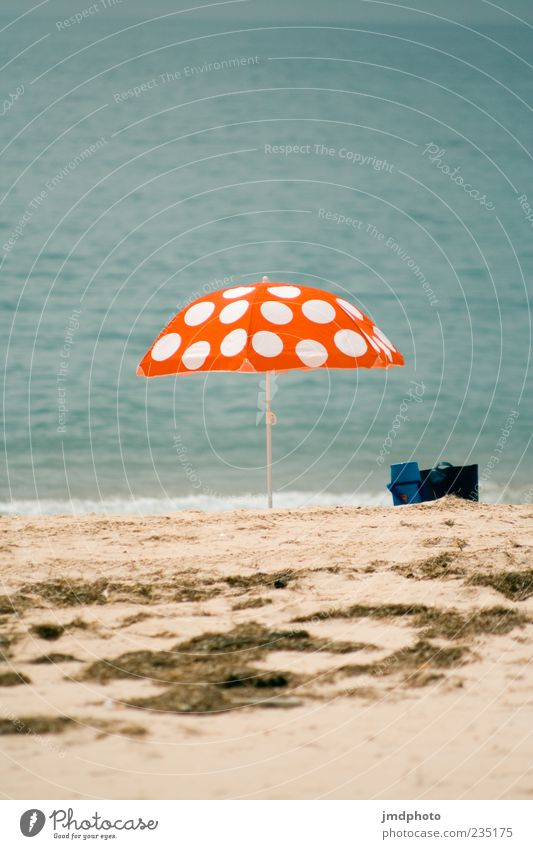 Parasol fly agaric Relaxation Calm Vacation & Travel Tourism Trip Summer Summer vacation Sunbathing Beach Ocean Sand Water Coast Sunshade Amanita mushroom
