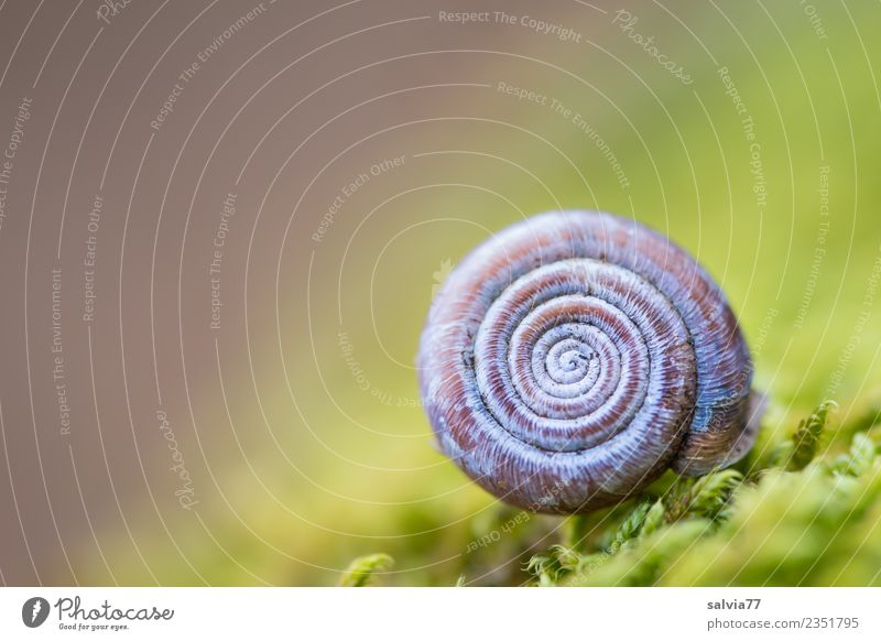 Nature Plant Blue Green Animal Calm Forest Brown Design Earth Esthetic Idyll Perspective Round Break Soft