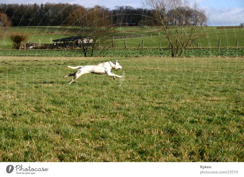 Dog Winter Forest Meadow Spring Field Speed To go for a walk Running Paw Animal foot Crossbreed Walk the dog Hundred-metre sprint