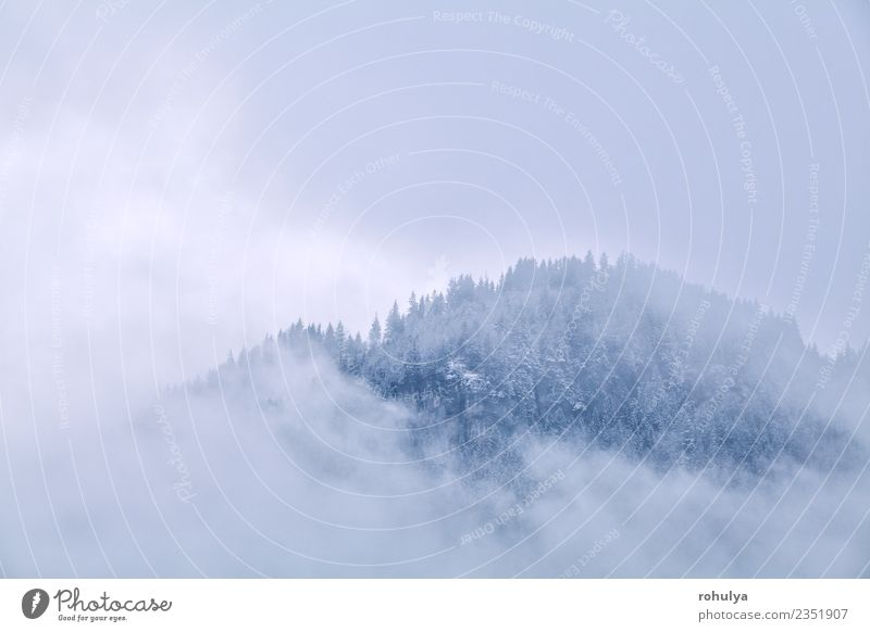 mountains top in winter fog, Germany Nature Vacation & Travel Landscape Clouds Winter Forest Mountain Snow Tourism Fog Weather Vantage point Peak Alps Serene