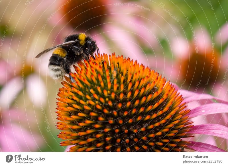 busy bee Joy Work and employment Operational Business Running Blossoming Flying Feeding Smart Speed Yellow Pink Spring fever Love of animals Beautiful Serene