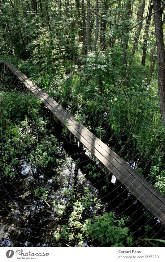 Nature Green Tree Plant Leaf Forest Landscape Lanes & trails Wet Bridge Bushes Fluid Footbridge Damp Marsh Twigs and branches