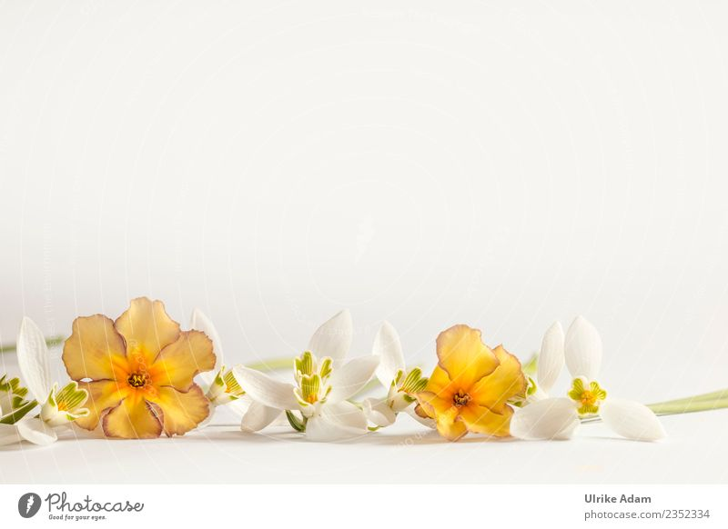 Plant Beautiful White Flower Relaxation Calm Life Background picture Blossom Spring Feasts & Celebrations Orange Contentment Decoration Birthday Romance