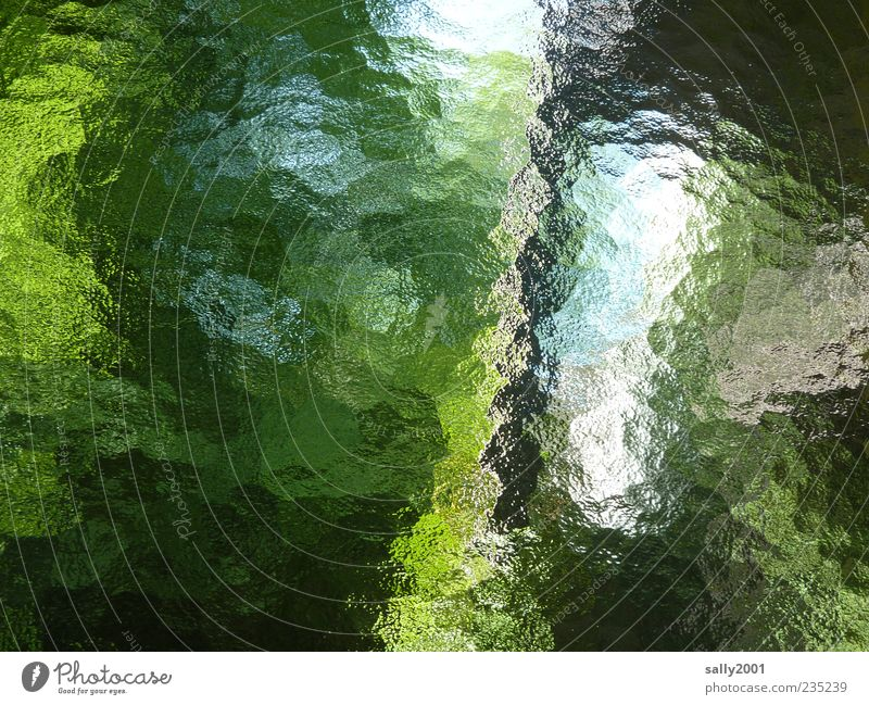 Sky Blue Green Tree Plant Leaf Window Garden Background picture Glass Esthetic Bushes Window pane Surrealism Copy Space View from a window