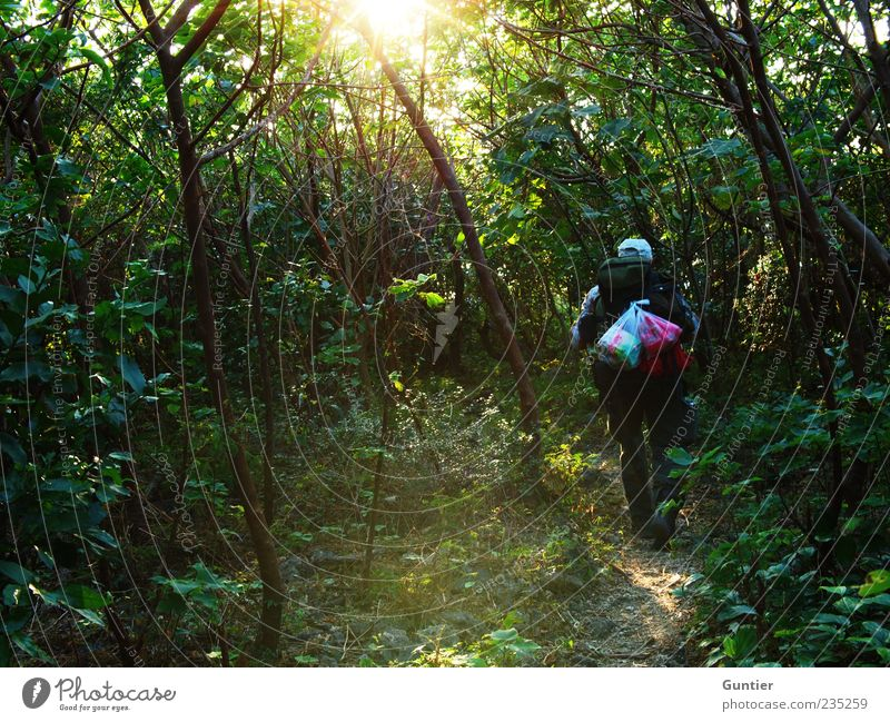 walk dady walk,... Masculine 1 Human being 45 - 60 years Adults Environment Nature Plant Earth Sun Summer Tree Bushes Foliage plant Wild plant Virgin forest