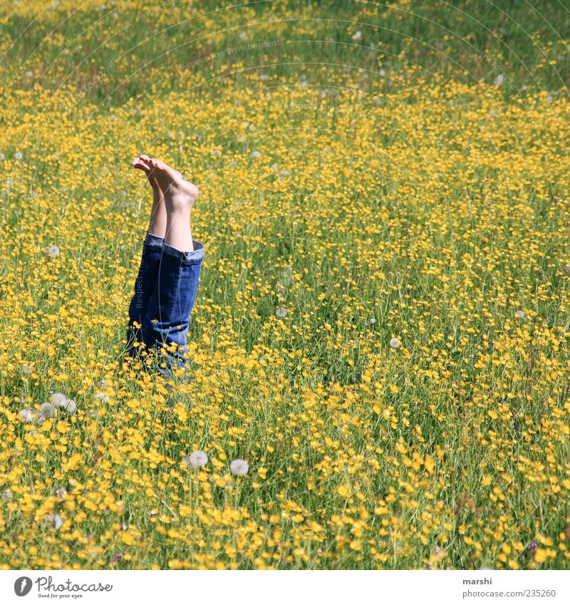 Nature Plant Summer Flower Yellow Landscape Meadow Grass Spring Blossom Legs Funny Feet Lie Jeans Couch