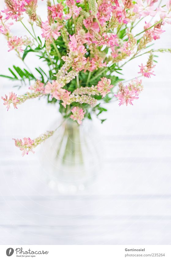 Nature White Green Beautiful Plant Summer Flower Spring Blossom Bright Pink Fresh Decoration Blossoming Bouquet Vase