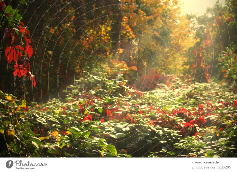 Beautiful Sun Day Summer Nature Plant Autumn Beautiful weather Tree Grass Bushes Fern Leaf Blossom Agricultural crop Wild plant Garden Colour Peace Idyll
