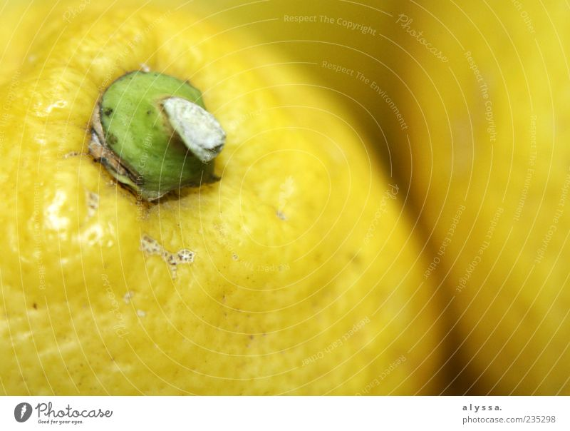 pissed off makes fun. Food Fruit Lemon Exotic Round Sour Yellow Green Colour photo Interior shot Deserted Blur Edible nut Close-up Detail