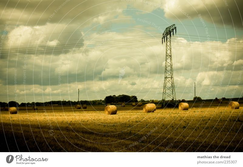 Sky Nature Beautiful Tree Summer Clouds Environment Landscape Bright Horizon Wind Field Energy industry Beautiful weather Harvest Electricity pylon