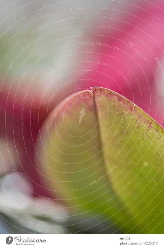 In love. Plant Spring Leaf Pink Smooth Structures and shapes Rachis Colour photo Multicoloured Exterior shot Close-up Detail Macro (Extreme close-up)