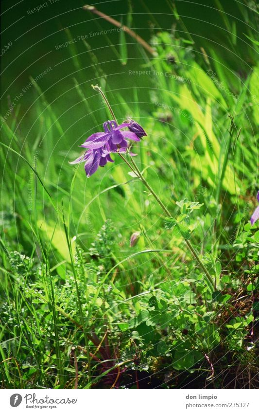 orchid Nature Spring Summer Plant Grass Wild plant Exotic Meadow Blossoming Growth Fragrance Green Violet Moody Analog Colour photo Exterior shot Detail