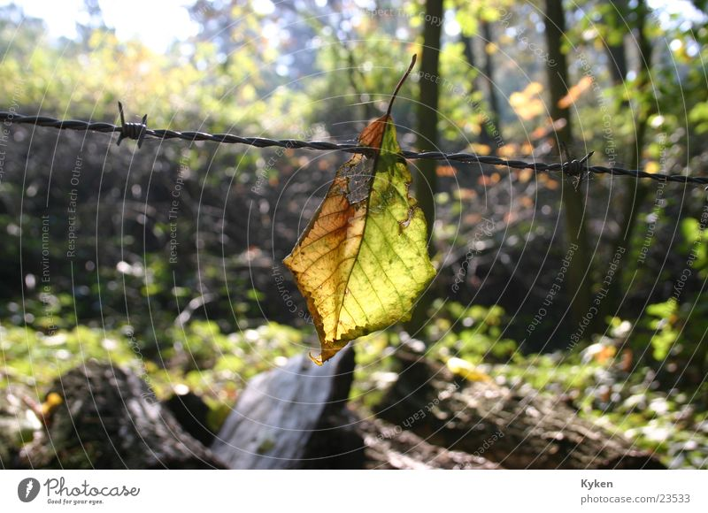 the end Forest Leaf Autumn Barbed wire Light Goodbye Sun